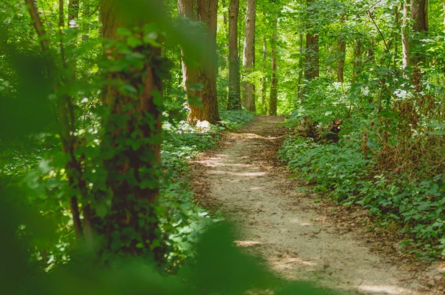 Blog - Taking shortcuts