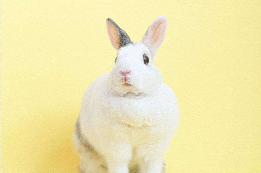 RabbitMQ WSO2 Enterprise Integrator